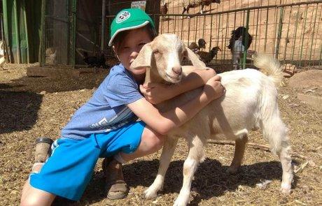 כפר החיות בכפר גלעדי – בואו לפגוש חיות שמחות