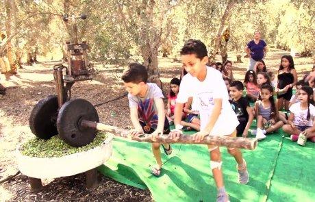 פעילות מסיק המשפחות בשמנא חוזרת לעונה נוספת בשבתות! בנובמבר בלבד!