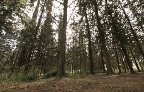 בשבת 9.4 – מפגש חברי קבוצת מה עושים בשבת ביער בן שמן