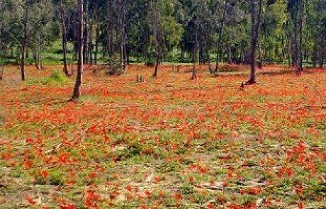 המלצה למסלול פריחה ונוף בדרום אדום שמתחיל ביער שוקדה