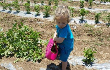 אטרקציות לילדים וטיולי משפחות בשבת הקרובה