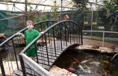 פארק מיטל במשתלות רגב – פארק חוויתי לכל המשפחה