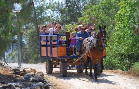 חוות הסוסים בוורד הגליל-כשמסורת רכיבה ארוכת שנים פוגשת מקצוענות ונופים מרהיבים!