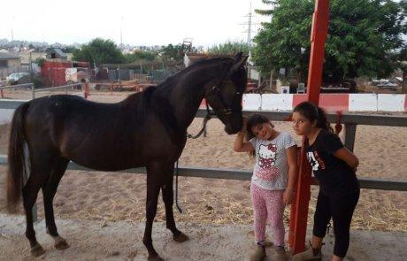 חוות הדר – רכיבה על סוסים בלב העיר ראשון לציון