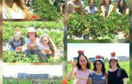 קטיף תות בשרון – קסם התות